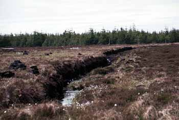Waiting for Gaia to regenerate: a peat bog